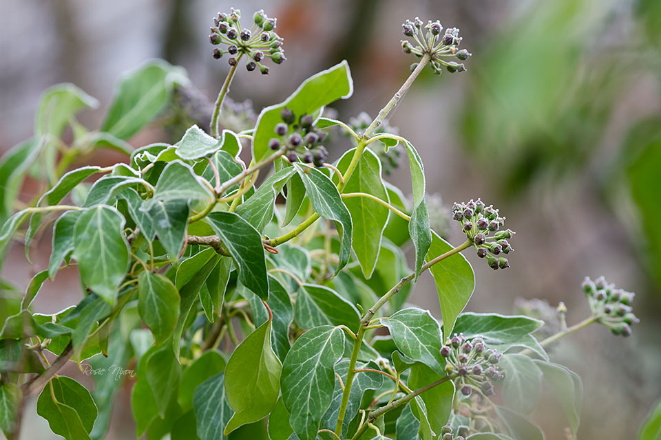this is a image of lots of adult adult leaves and fruits