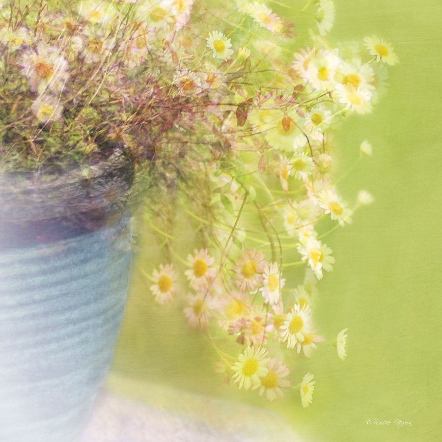 practical photography interview erigeron multiple exposure