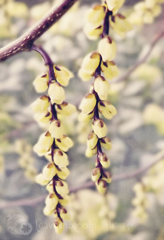 Pixel Bender Oil Painting - yellow winter flowering Stachyurus praecox