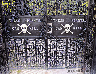 The Poison Garden Leavesnbloom Gardening Photography