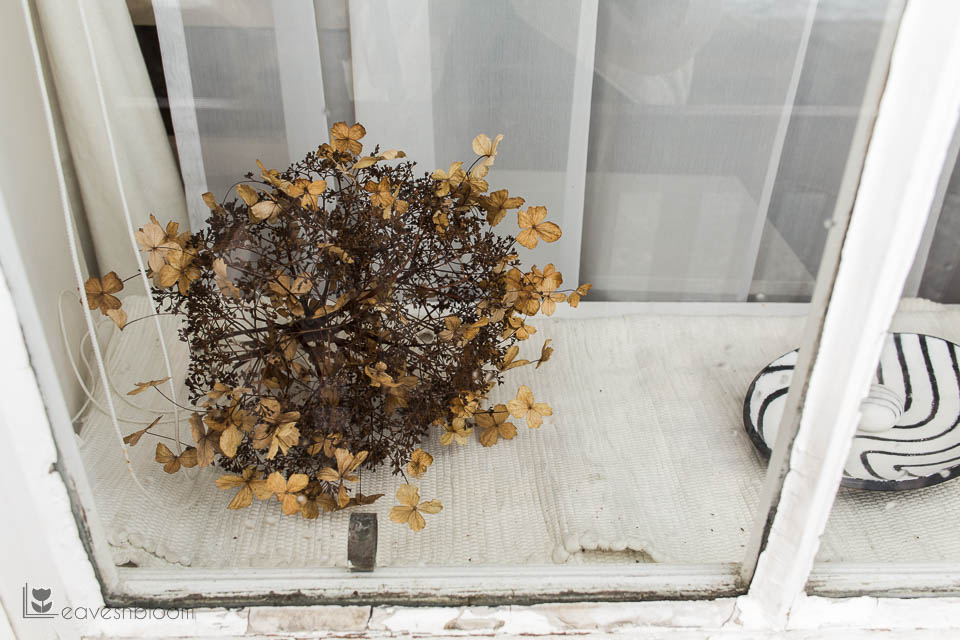 hydrangea dried on window sill