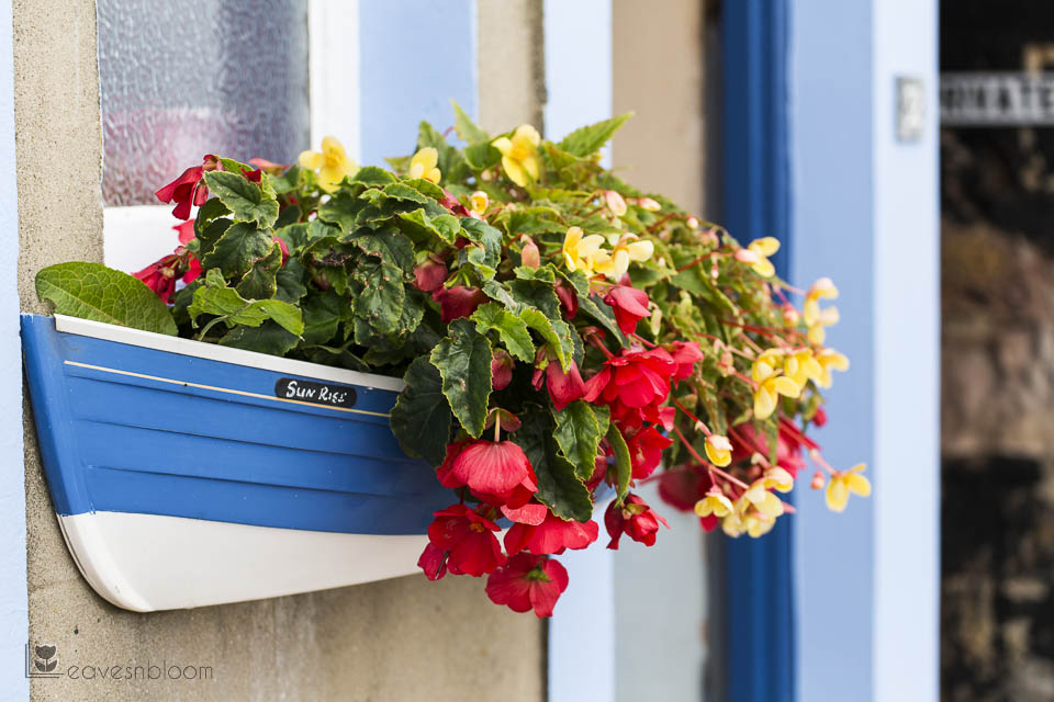 sunrise boat flower container