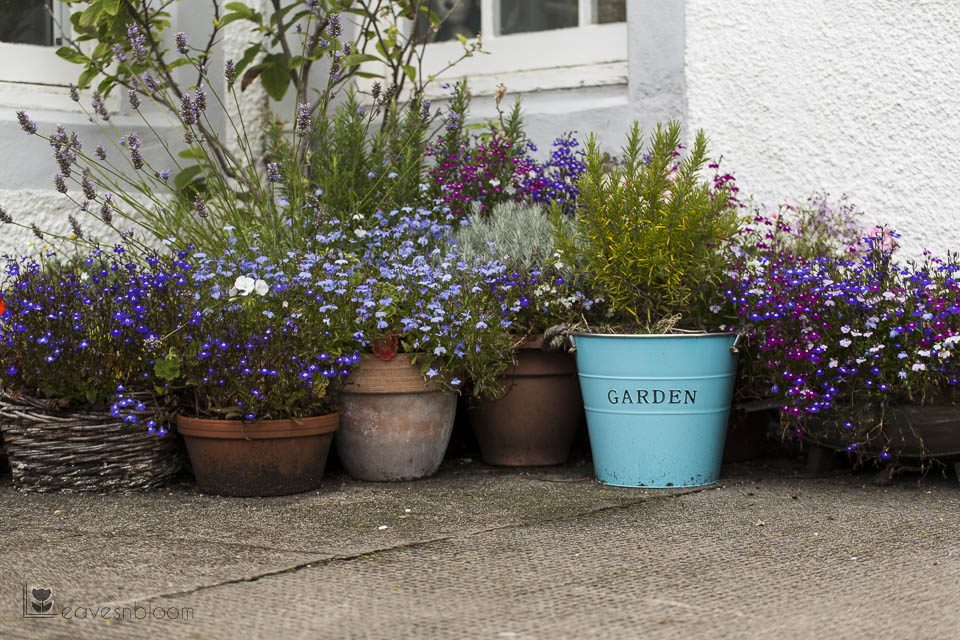 planted container garden pittenweem