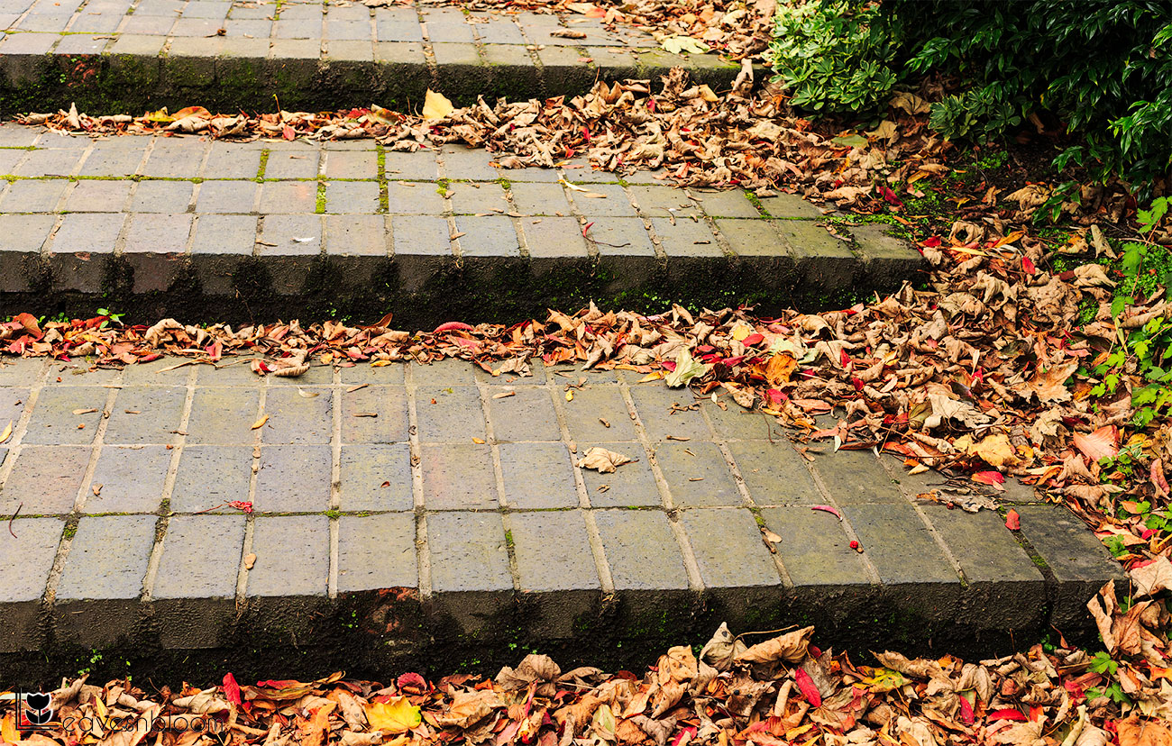 steps and autumn leaves on Scott Kelby's Photowalk