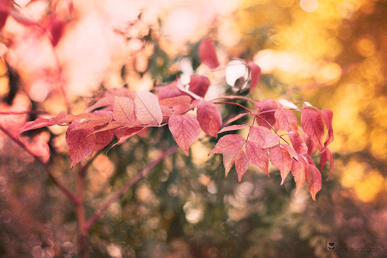 pink autumn leaves seen on Scott Kelby's Photowalk