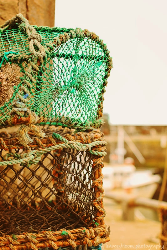 this is an image of sea green lobster pots - East Neuk photography