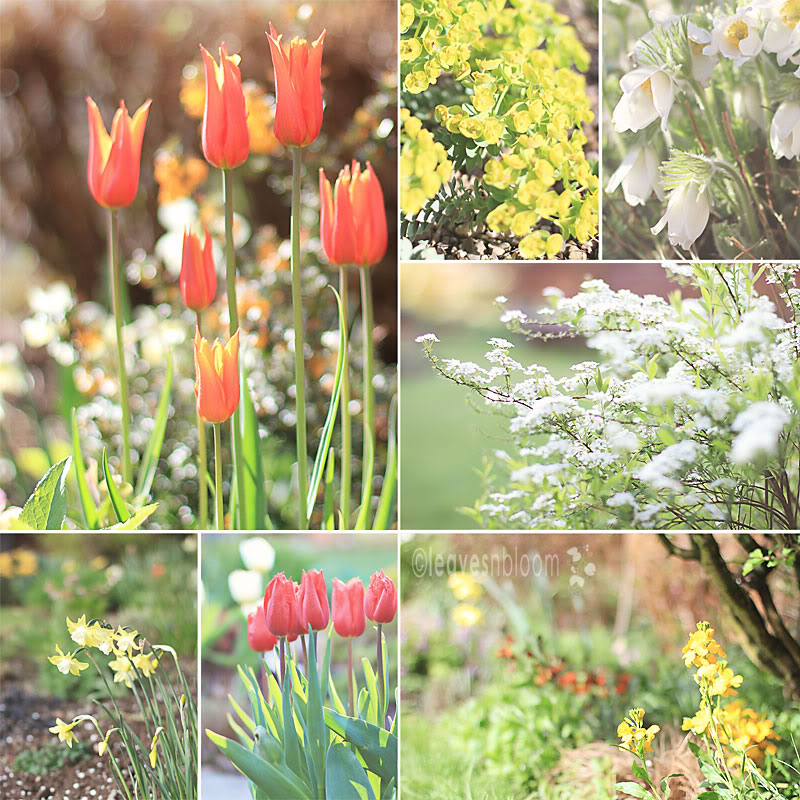 April flowers in the garden for Garden bloggers bloom day collage 2