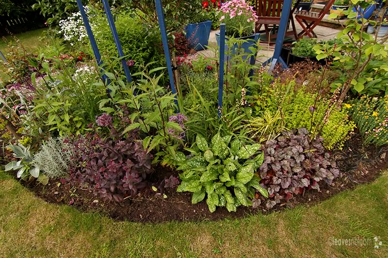 what's in bloom in July - Santolina, Sedum 'Purple Emperor', Pulmonaria and Heuchera 'Silver Scrolls'
