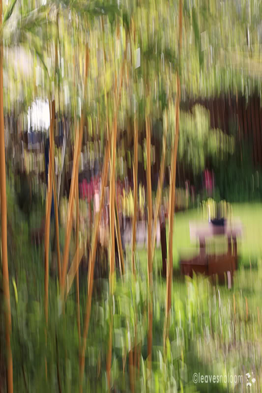 Impressionist painterly photographs: Phyllostachys aurea