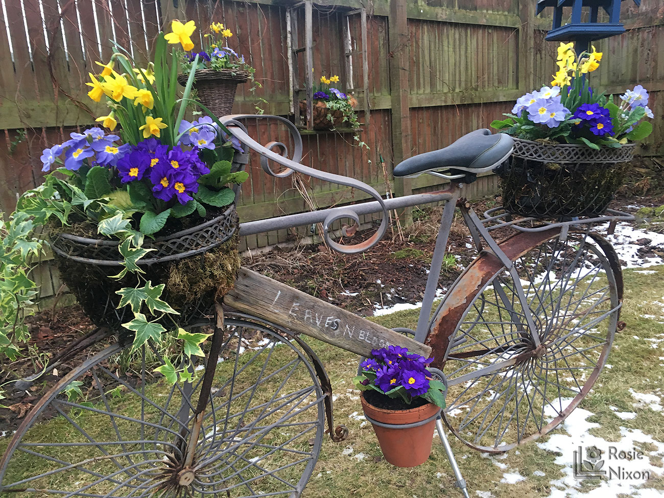leavesnbloom bicycle planted up for Beechgrove Garden