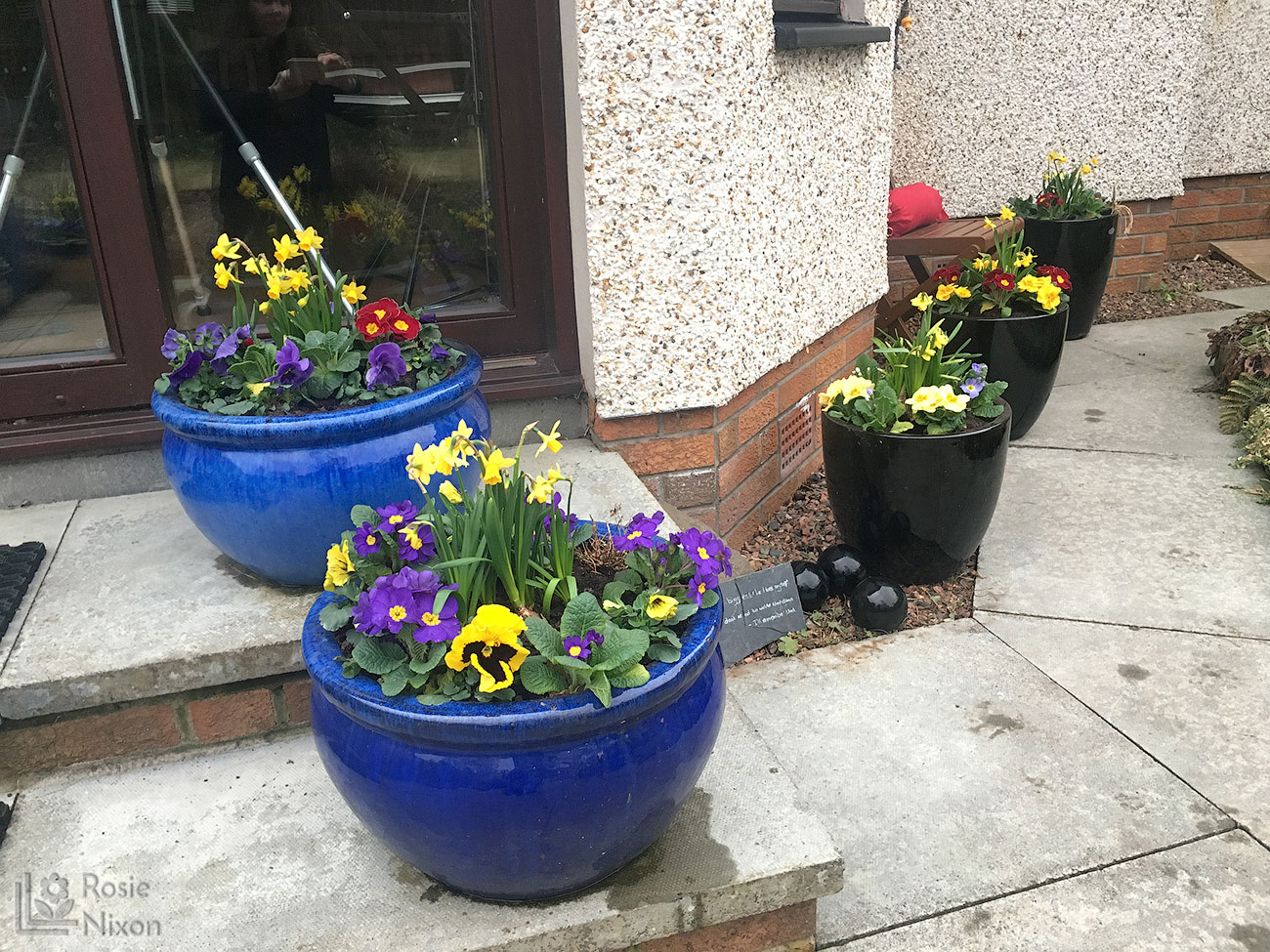 daffodils, primroses and pansies in planted containers