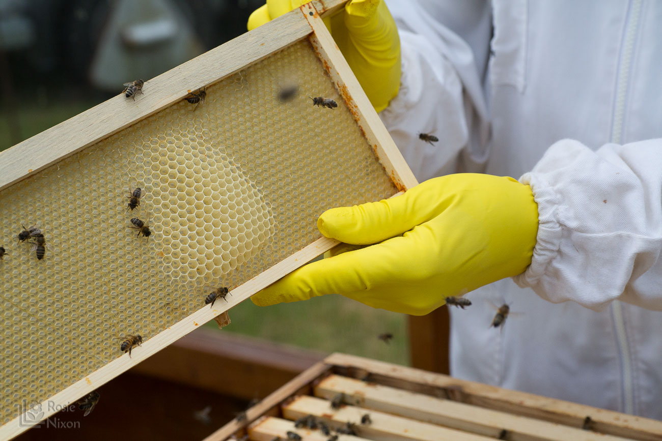 another frame with a bit more activity - bee happy ayr beekeepers gardening scotland
