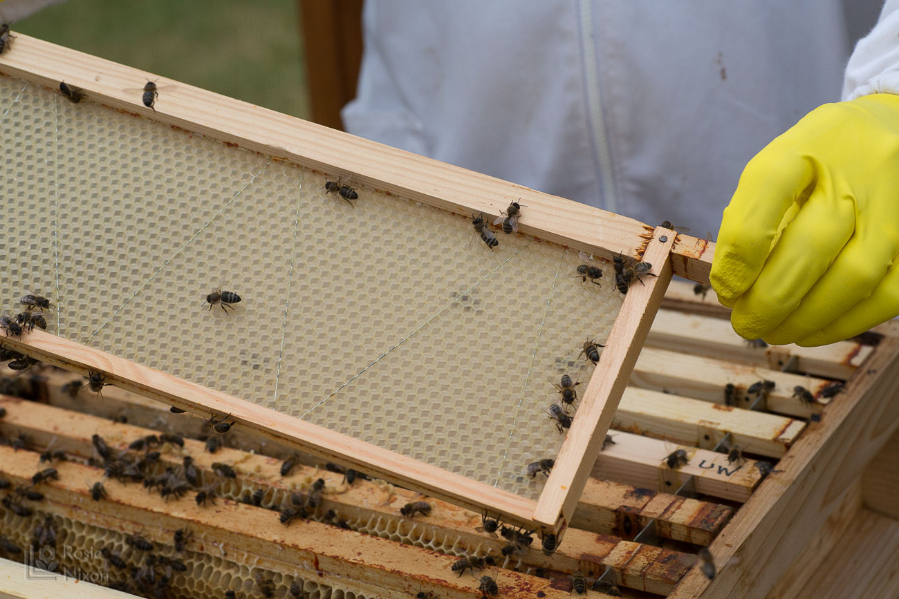 bee hive frame bee happy ayr beekeepers gardening scotland