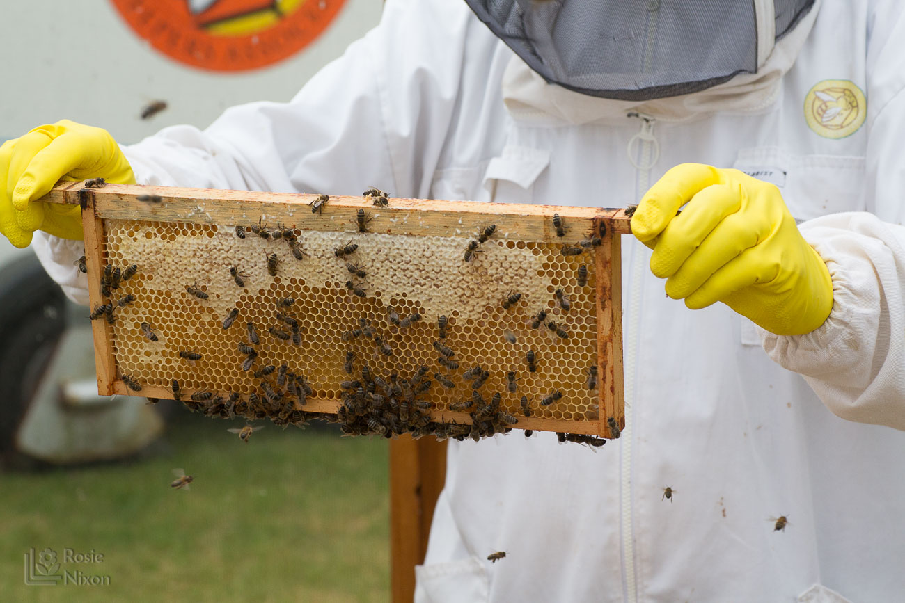 lots of bee activity - bee happy ayr beekeepers gardening scotland
