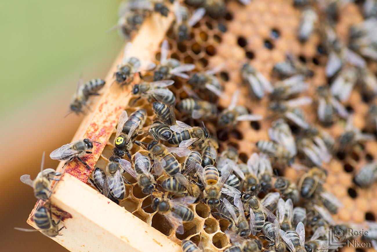 queen bee bee happy ayr beekeepers gardening scotland